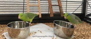 Frischfutter Sperlingspapageien