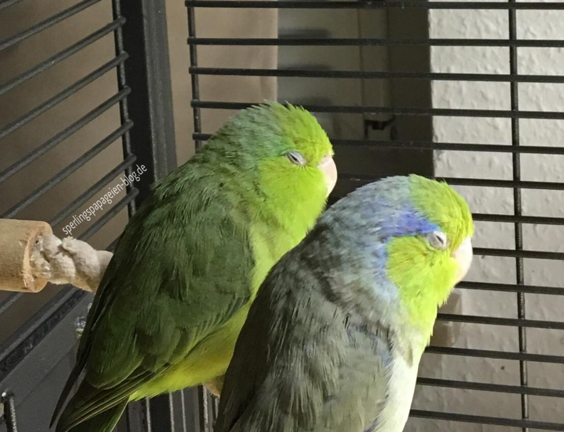 UV-Lampe für die Beleuchtung von Vogelvolieren