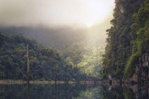 Tropischer Regenwald mit hoher Luftfeuchtigkeit