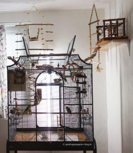 Vogelkäfig Standort in einem hellen, ruhigen und zugluftgeschützten Zimmer
