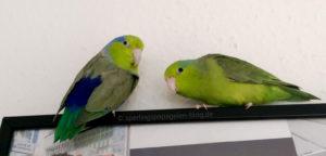 In einem vogelsicheren Zimmer sollte der Bilderrahmen notfalls auch einer Landung standhalten