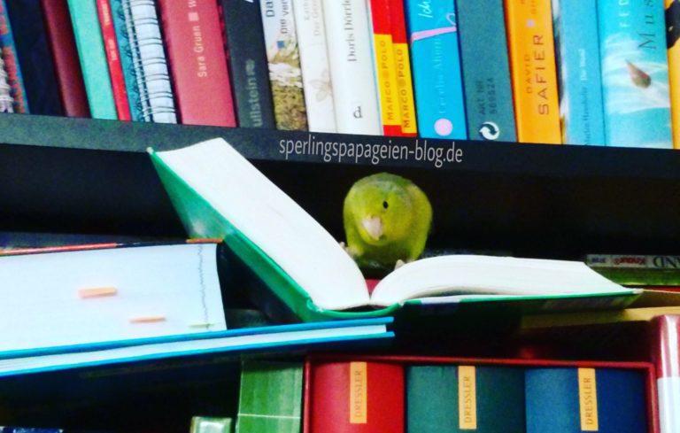 Papageiennamen: Ein Sperlingspapagei sucht nach Ideen