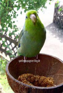 Papageiennnamen