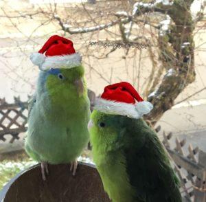 Advent und Weihnachten vogelsicher machen