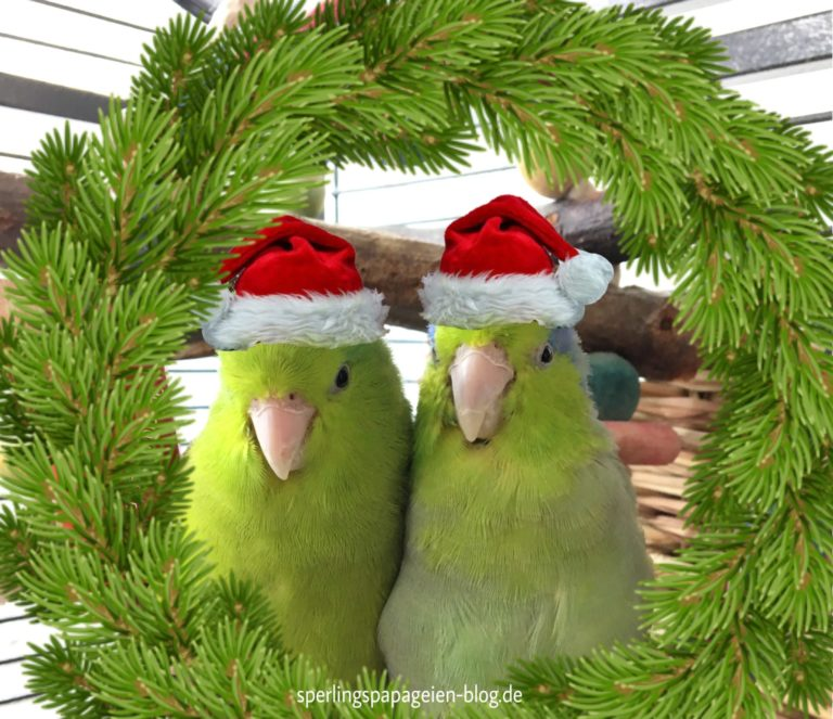 Sperlingspapageien wünschen frohe Weihnachten