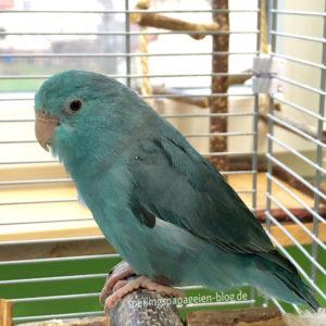 Papagei in Quarantänekäfig